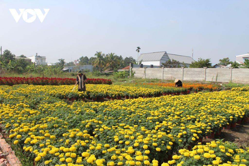 Tiền Giang: Làng hoa Mỹ Tho hấp dẫn thị trường Tết
