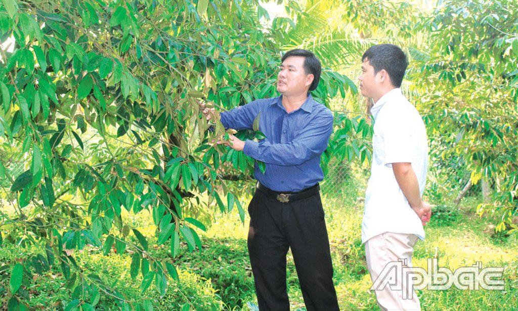 """Tiền Giang: Bỏ kiểu nuôi, trồng """"ôm đồm, lung tung"""", chuyên tâm trồng sầu riêng chuẩn ngon, ông nông dân này giàu hẳn lên"""